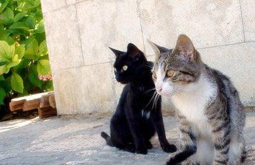 Faire fuir les chats de votre jardin