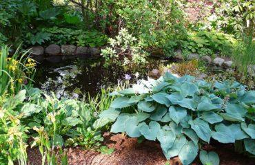 Un bassin dans son jardin