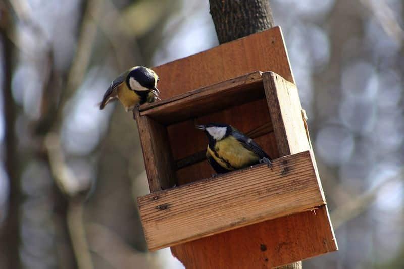 comment fabriquer une mangeoire pour oiseaux