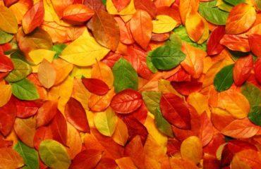 que faire dans son jardin en automne