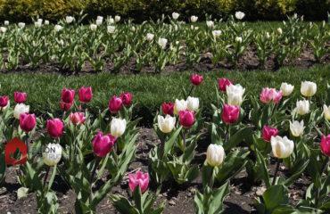 que planter en avril