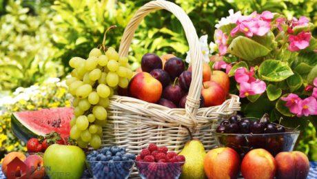 faire pousser des fruits dans son jardin