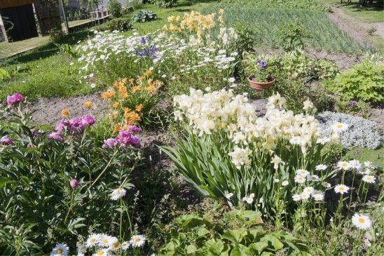 plantez les fleurs de son jardin en juin