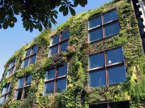 Un exemple de mur végétal