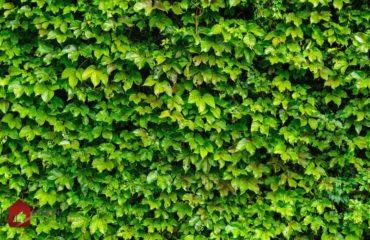 faire un mur végétalisé