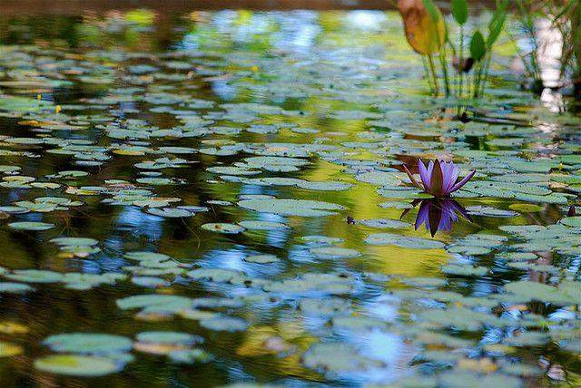 realisation bassin dans jardin